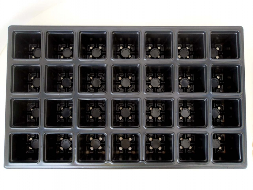 28 cells seedling tray